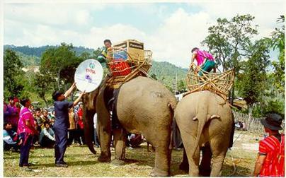 biblioeelefante